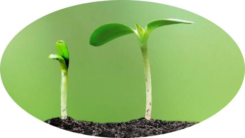 爱土壤电脑商业计划书
